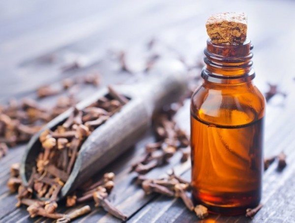 Herbal Oil Clove Bud Oil Health Benefits And Uses